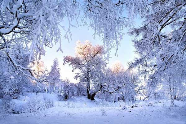 зима 11